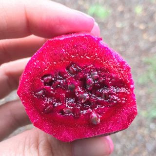 The inside of a Prickly Pear fruit - also known as a 'tuna' - gives your culinary dishes this bright color and flavor.