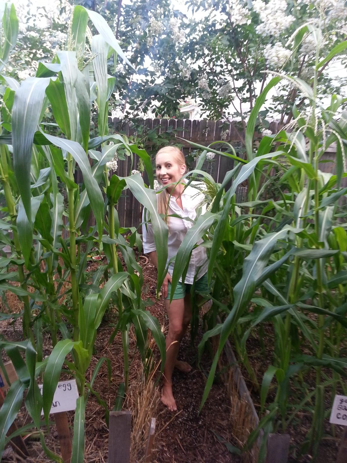 Yes, you can grow corn in a suburban backyard.