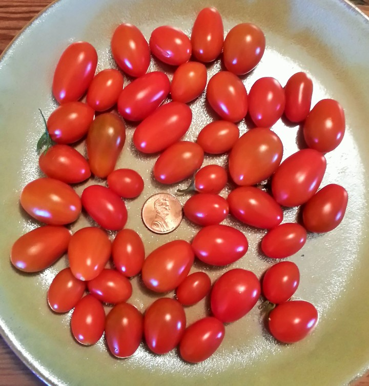 A daily harvest in the peak of my tomato-growing days.