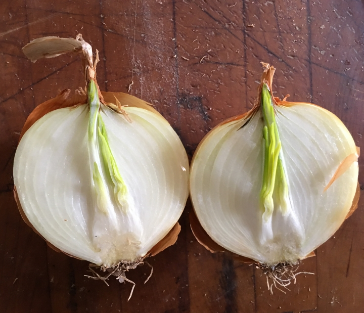 Inside of the sprouted onion.